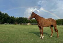 My Right Horse Adoptable Horse of the Week - Chrome