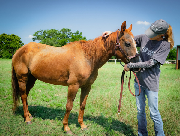 My Right Horse Adoptable Horse of the Week - Cinnamon, the pony