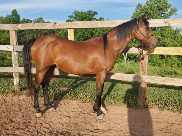 My Right Horse Adoptable Horse of the Week - Cupcake