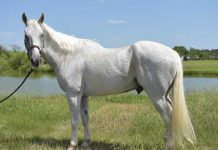 Adoptable Horse of the Week - Dakota