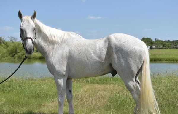 Adoptable Horse of the Week - Dakota