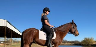 My Right Horse Adoptable Horse of the Week - Domingo