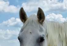 My Right Horse Adoptable Horse of the Week - Fantasy