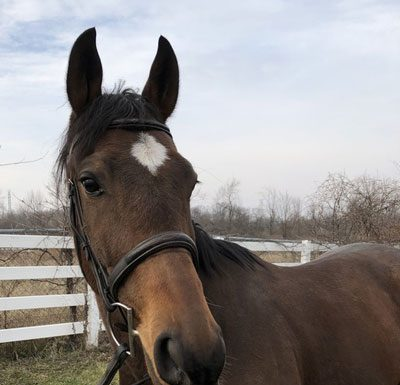 My Right Horse Adoptable Horse of the Week - First Shot