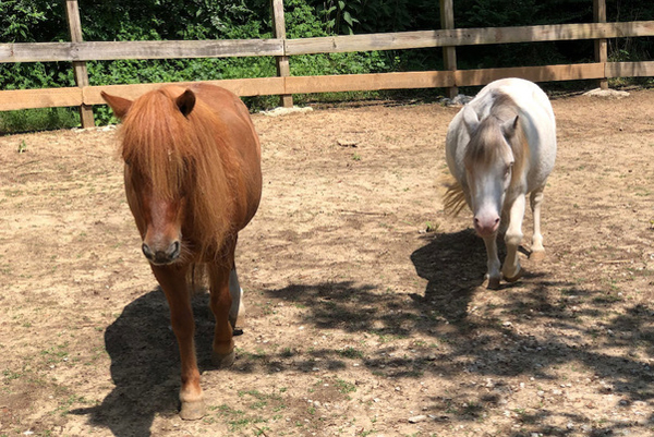 Adoptable Horse of the Week - Frankie and Stella