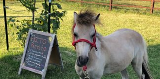 My Right Horse Adoptable Horse of the Week - Frito