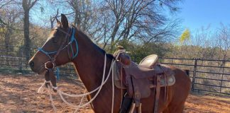 My Right Horse Adoptable Horse of the Week - Fuego