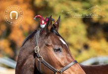 My Right Horse Adoptable Horse of the Week - High Roller