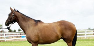 My Right Horse Adoptable Horse of the Week - Lena
