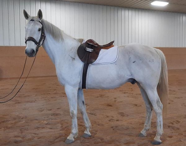 My Right Horse Adoptable Horse of the Week - Leroy Kilkinney