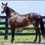 My Right Horse Adoptable Horse of the Week - Lexie