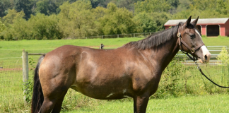 Adoptable Horse of the Week - Lover's Lane (aka Laney)