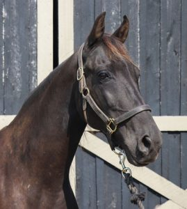 My Right Horse Adoptable Horse of the Week - Mack