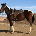 My Right Horse Adoptable Horse of the Week - Mariposa