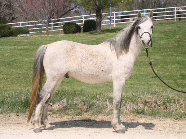 My Right Horse Adoptable Horse of the Week - Mendora