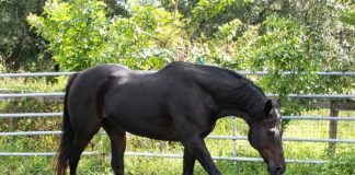 Adoptable Horse of the Week - Mulch