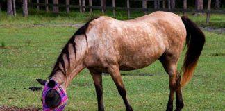 My Right Horse Adoptable Horse of the Week - Nova