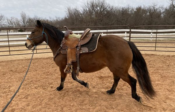 My Right Horse Adoptable Horse of the Week - Pudge