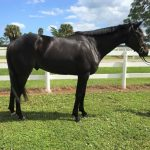Adoptable Horse of the Week - Rawlins
