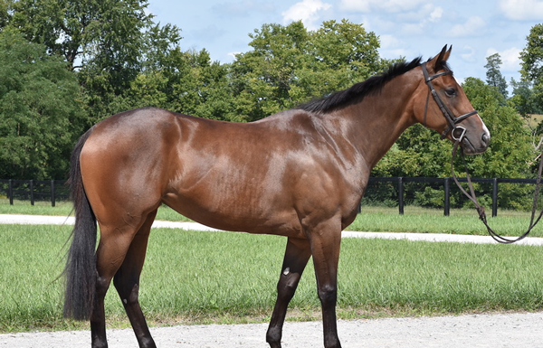 My Right Horse Adoptable Horse of the Week - Schade