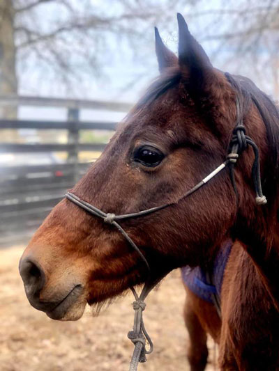 My Right Horse Adoptable Horse of the Week - Shady
