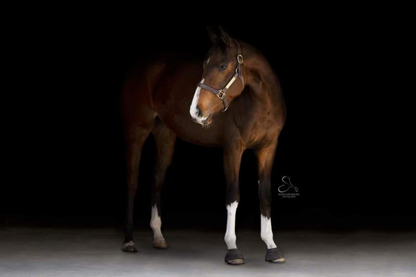 My Right Horse Adoptable Horse of the Week - Taco