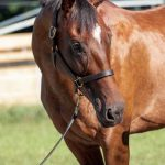 My Right Horse Adoptable Horse - Two Bow Ties