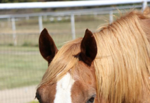 My Right Horse Adoptable Horse of the Week - Uno