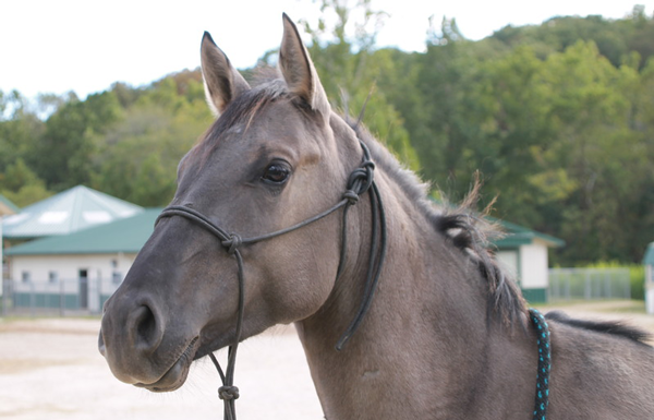 My Right Horse Adoptable Horse of the Week - Zara