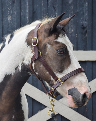 My Right Horse Adoptable Horse of the Week - Hawk