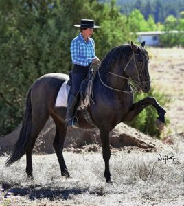 Andalusian stallion with rider.
