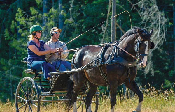 Getting Started with Driving Horses
