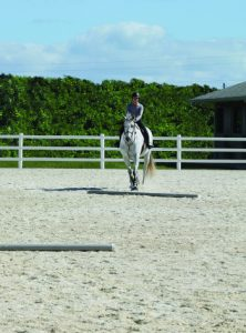 Horse and rider taking angled approach to first pole. - Horse Jump takeoff