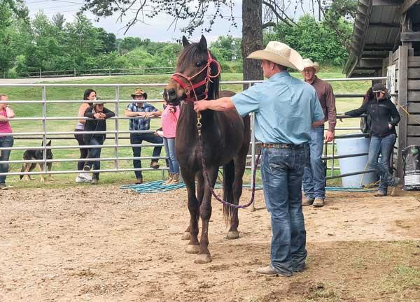 Trainer Choosing a Horse