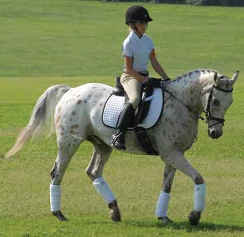 Appaloosa - Horse Colors
