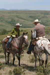 Appaloosa horses on riding trail.