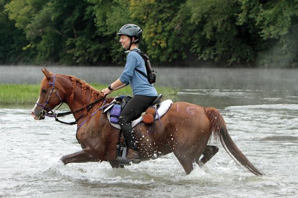 Breed - Arabian Horse; Discipline - Endurance