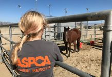 ASPCA Rescue and Recovery Initiative
