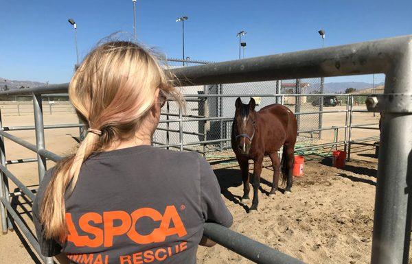 ASPCA Rescue and Recovery Initiative