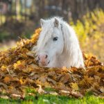 Pony in Autumn Leaves
