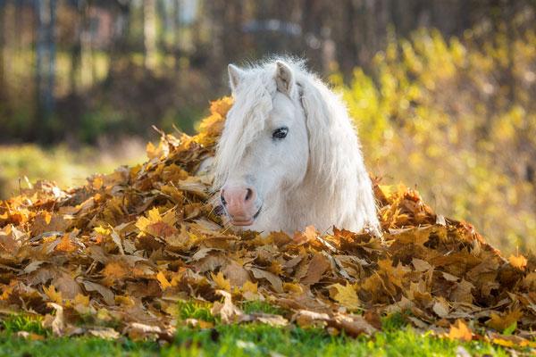 Pony in Autumn Leaves