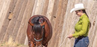 Introduce a Horse to a Baby Pool