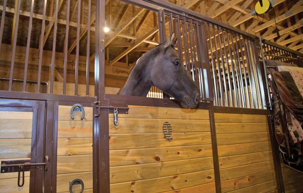 Designing Horse Stalls
