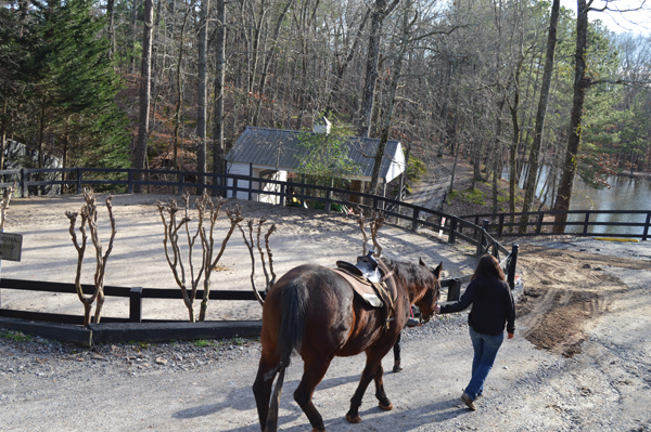 Career as a Barn Manager
