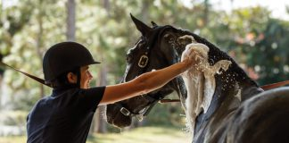 Bathing a Horse - Grooming Makeover