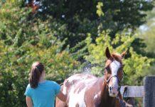 Bathing a Horse in a field