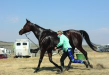 Rider trotting out horse at finish check.