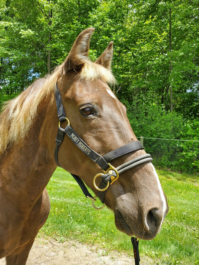 My Right Horse Adoptable Horse of the Week - Big Jake