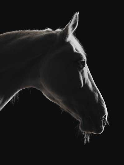 Horses in Transition - Auction vs. Adoption