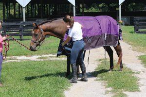 Unfolding horse blanket.